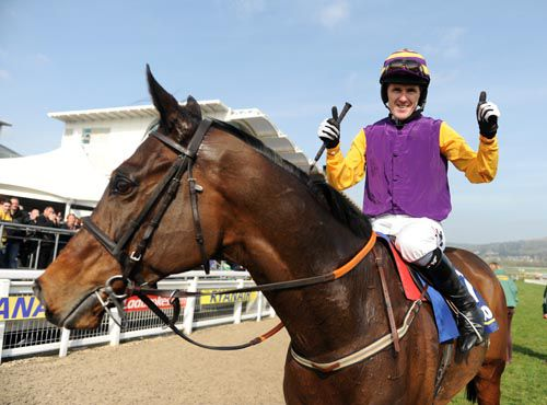 Noble Prince & Tony McCoy after winning the Jewson at the Cheltenham Festival in 2011