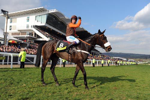 Long Run & Sam Waley-Cohen after winning the 2011 Gold Cup at Cheltenham