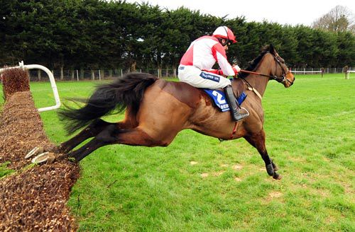 Bishopsfurze, favourite for the Goffs Thyestes Chase