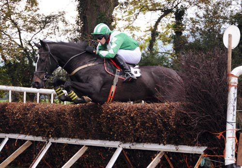 Exciting 'pointer' Island Confusion represents Lucinda Russell and Graham Watters at Ayr today