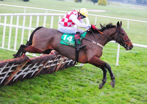 Misca Musca clears the last under John Cullen