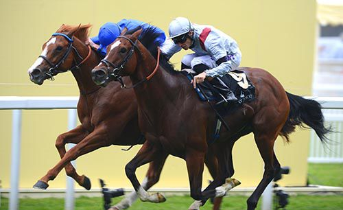 Qipco sussex stakes betting calculator betting lines for super bowl all lines