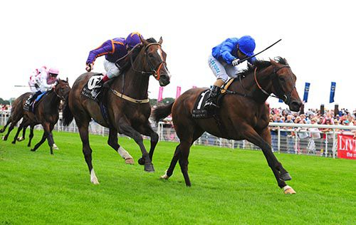 Top stayer Simenon (left) is a Melbourne possible