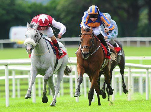 Carlo Bugatti (nearside) beat Whitey O' Gwaun in the 1st at Galway