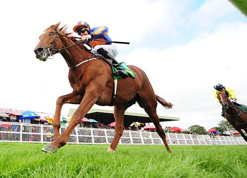 Eye Of The Storm pictured winning at Listowel on his last start