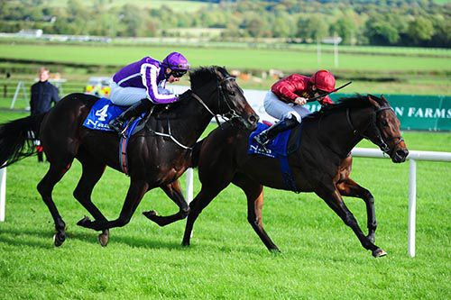 Johann Strauss seen here when runner-up to Sniper at Naas