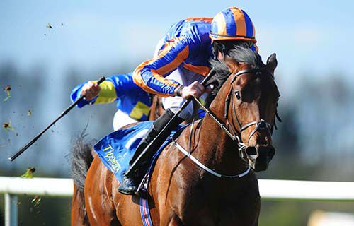 The Great War and Joseph O'Brien