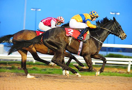 Egyptian Warrior (nearest) gets up close home to deny Long Journey Home