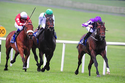 Guerre is driven out by Joseph O'Brien to beat Maarek (noseband) and Nocturnal Affair (green cap)