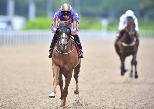 Hobart comes home a clear winner under Joseph O'Brien