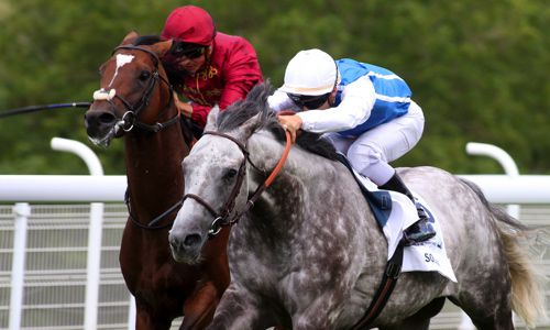 The grey Solow