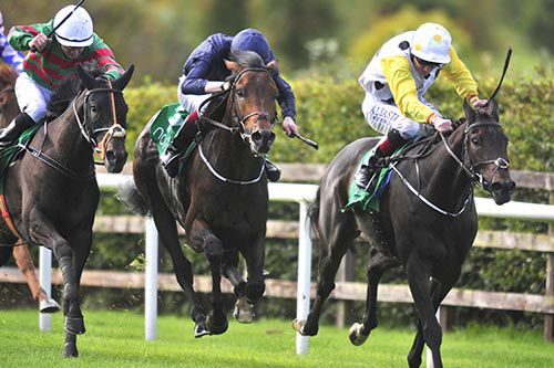 Giant Redwood and Joseph O'Brien (navy colours, centre)