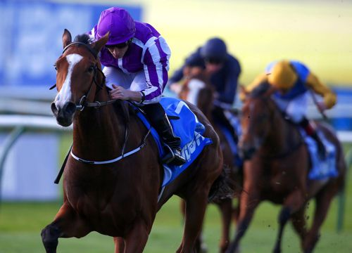 The Aidan O'Brien-trained Minding