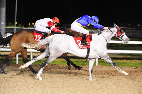Image result for six silver lane  horse dundalk garvan donnelly