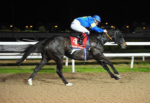 irishracing.com | News - Sharjah back in winning groove