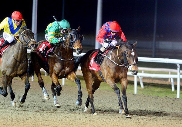 Image result for reckless lad horse horse dUNDALK
