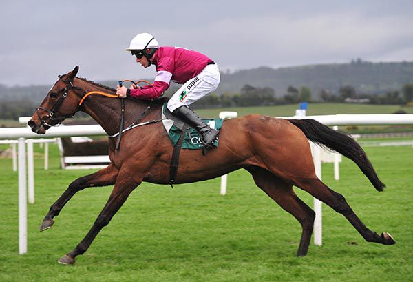 Image result for column of fire gigginstown horse