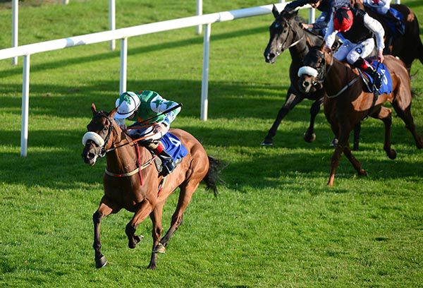 irishracing com   News - Decision to run Hamley pays off in style