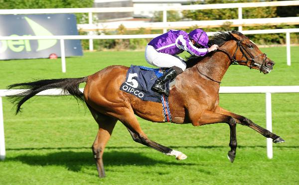 Pretty polly stakes betting trends john morrison nba betting system forum